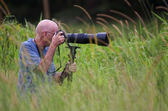 Chasing finches in the long grass