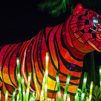 Tiger Animal Sculpture at Zoo at Vivid Sydney